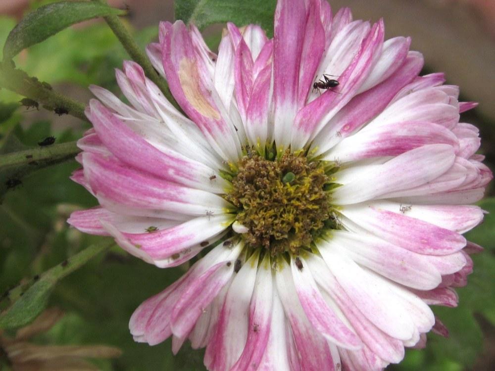 Wilting winter flower