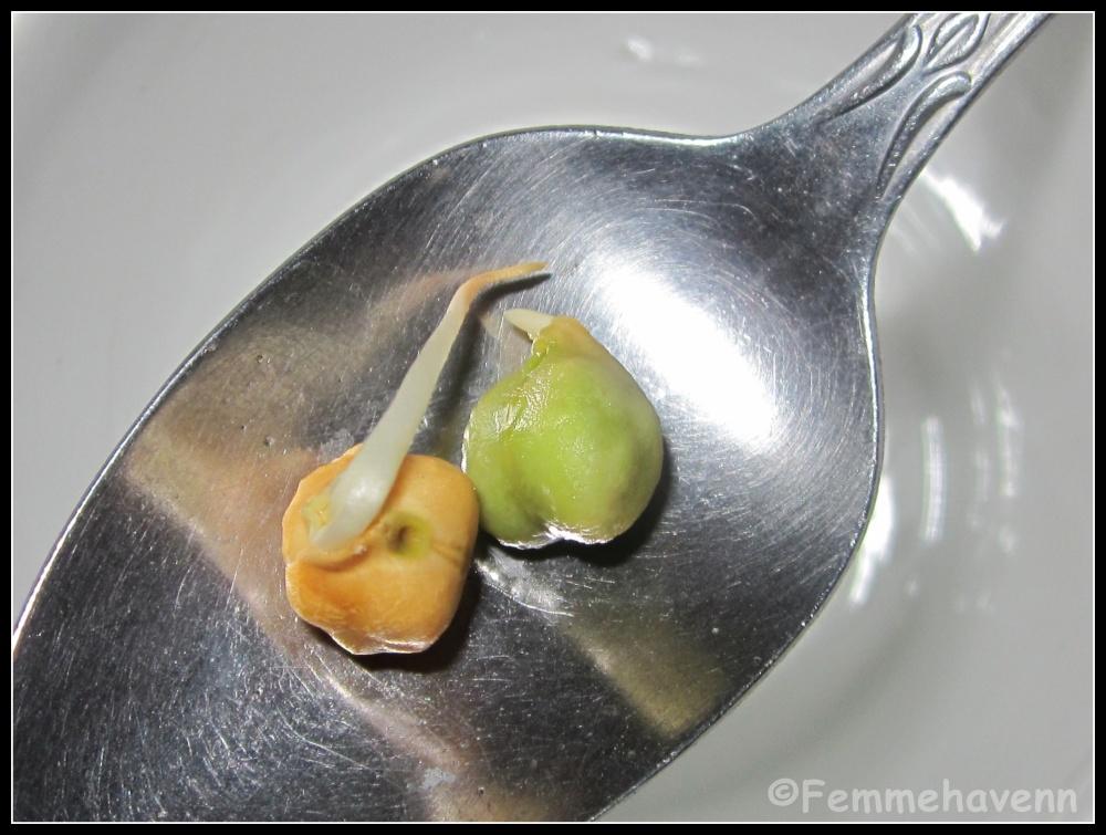 Protein Paratha/Chana Paratha (Green-Chickpea Flatbread)