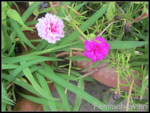Home Design Ideas. The Garden Flower With House The Flowers In A